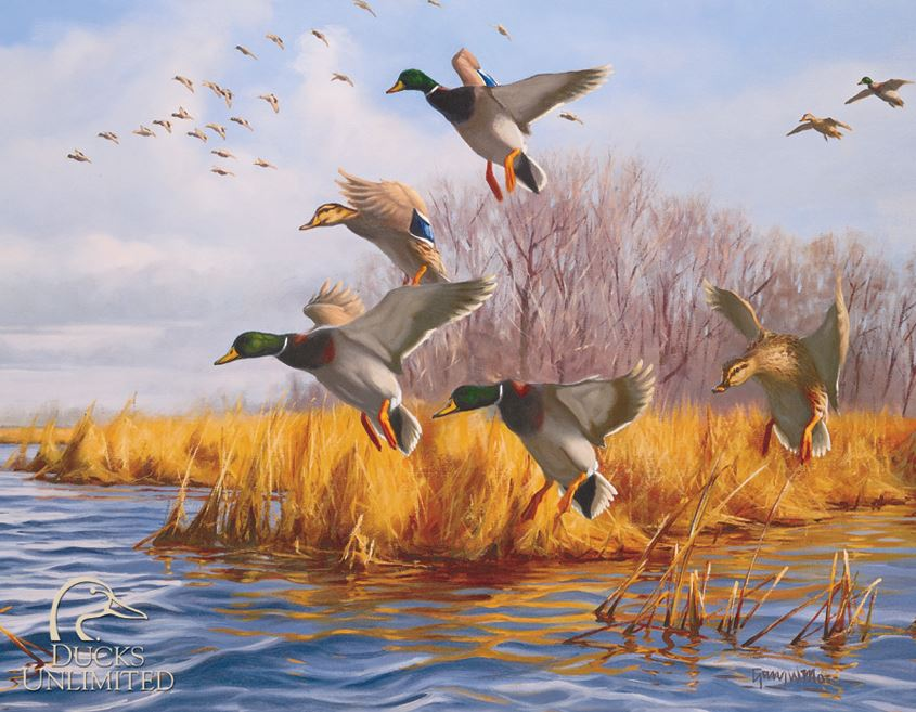 Tin Sign 1037 Ducks Unlimited - As Good As Home