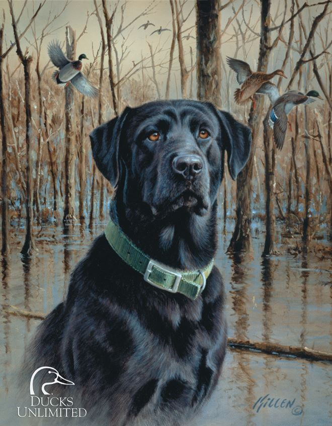 Tin Sign 1203 Ducks Unlimited - Great Retreivers
